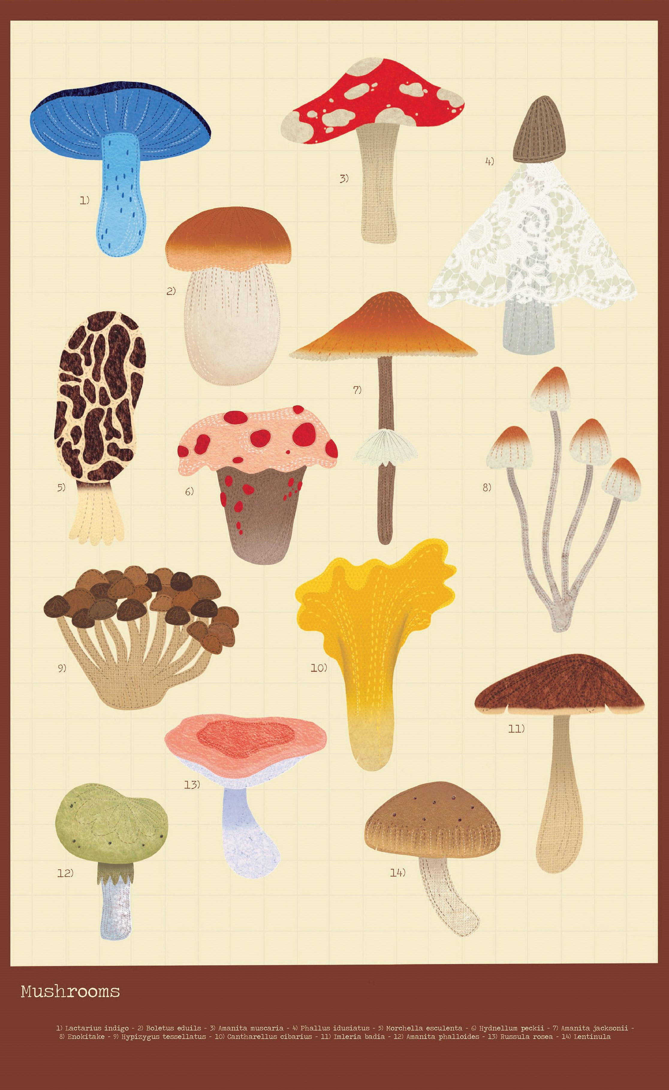 poster of mushroom illustrations