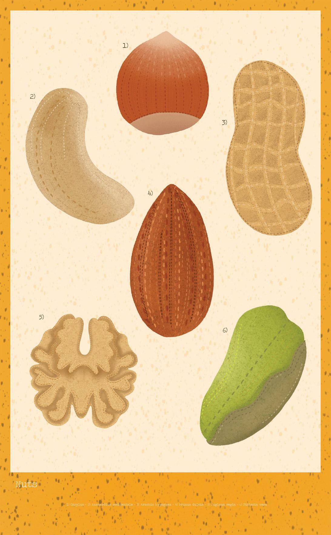 poster of nut illustrations