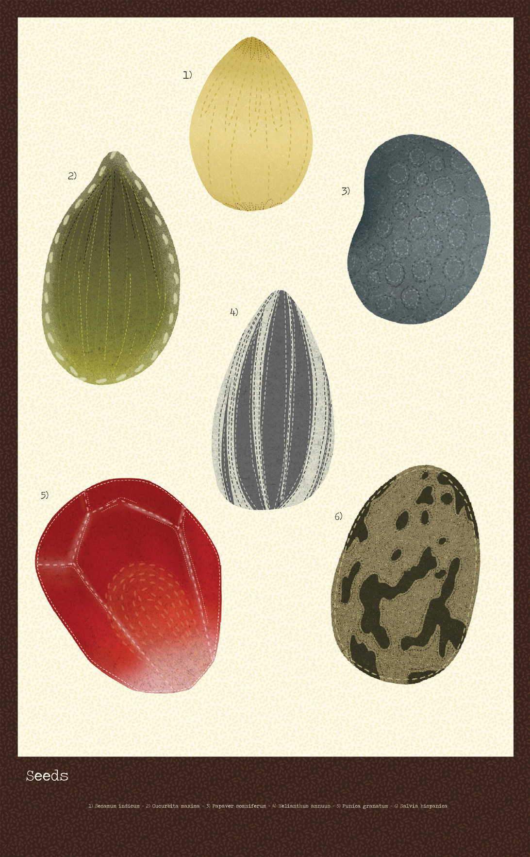 poster of seed illustrations