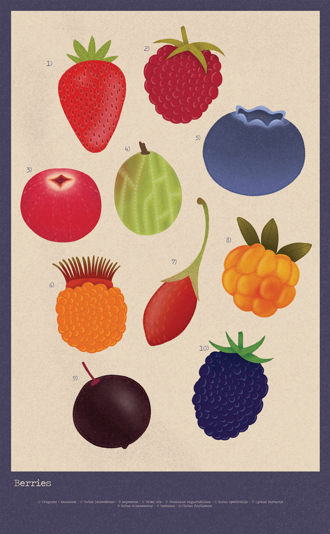 poster of berry illustrations