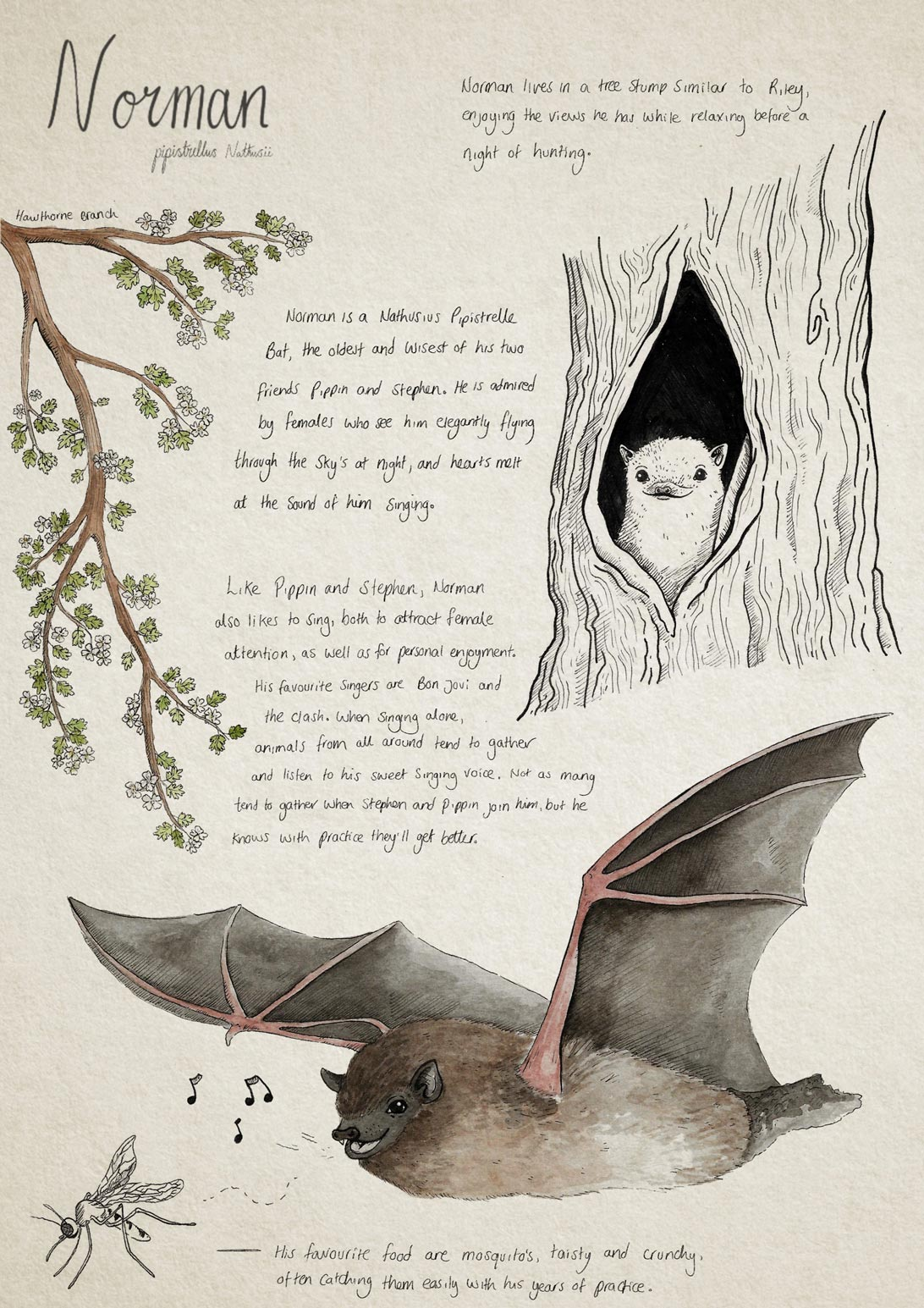 illustration and handwritten text information about the Norman bat