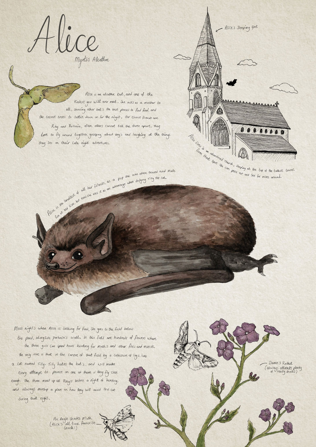 illustration and handwritten text information about the Alice bat